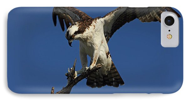 IPhone Case featuring the photograph Osprey With A Fish Photo by Meg Rousher