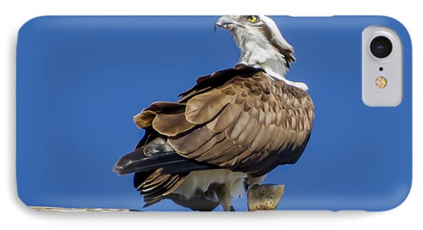 Osprey With Fish In Talons IPhone Case by Dale Powell