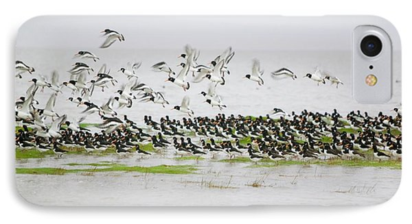Oystercatchers Roosting At High Tide IPhone Case