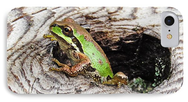 Pacific Chorus Frog IPhone Case by I'ina Van Lawick