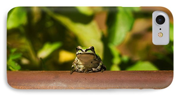 Pacific Treefrog IPhone Case by Ron Sanford