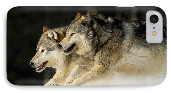 Pack Of Grey Wolves Running Through Photograph By John Hyde
