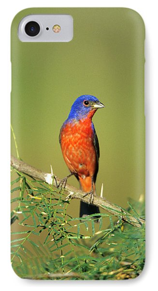 Bunting iPhone 7 Case - Painted Bunting (passerina Ciris by Richard and Susan Day