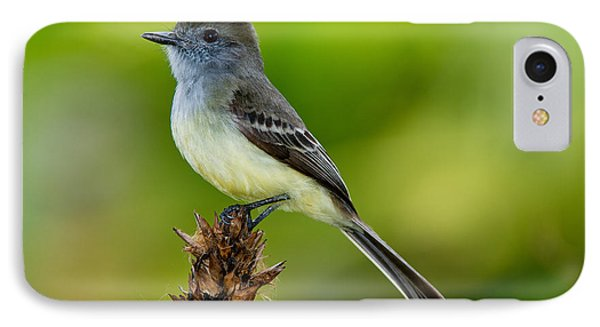 Pale-edged Flycatcher IPhone Case by Anthony Mercieca