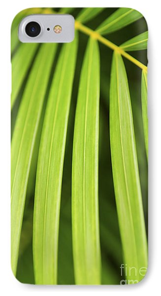 Palm Tree Leaf IPhone Case by Elena Elisseeva