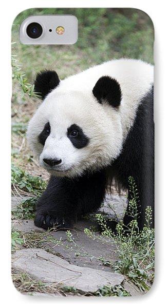 Panda IPhone Case by King Wu
