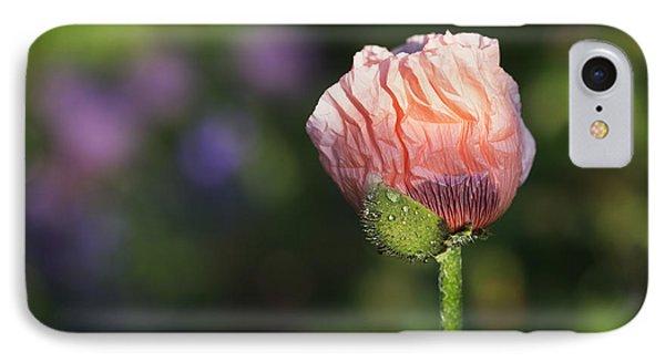 Papaver Orientale Carneum Poppy IPhone Case by Tim Gainey