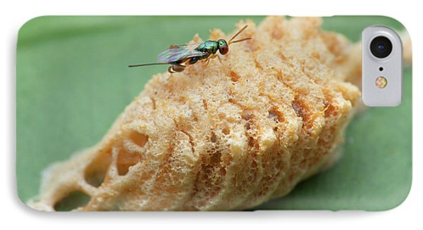 Parasitic Wasp On Mantis Eggs IPhone Case by Melvyn Yeo