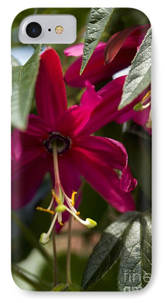 Passion Flower Passiflora Antioquiensis IPhone Case by Dr. Keith Wheeler