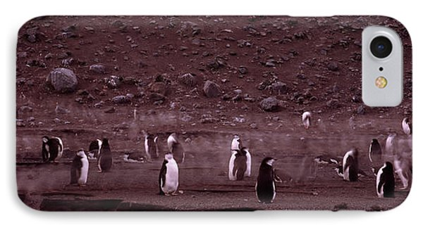 Penguins Make Their Way To The Colony IPhone Case by Panoramic Images