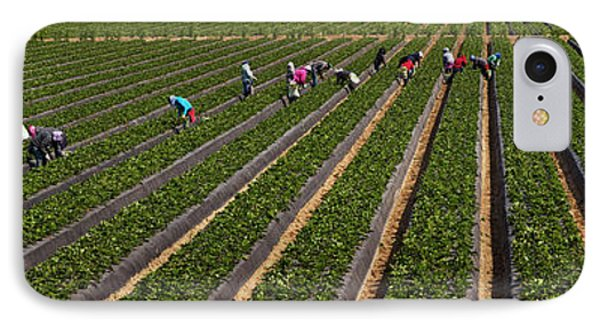 People Picking Strawberries In A Field IPhone Case by Panoramic Images