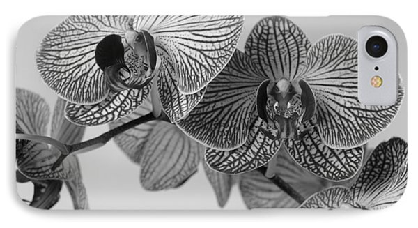 Phalaenopsis Orchid IPhone Case by Dariusz Gudowicz