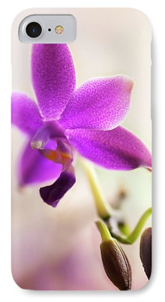 Phalaenopsis Orchid Flower IPhone Case by Maria Mosolova
