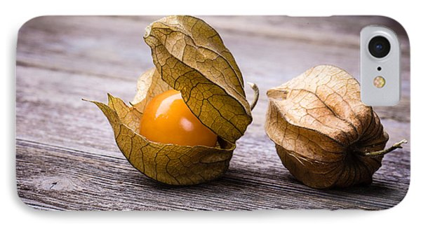 Physalis  IPhone Case by Jane Rix