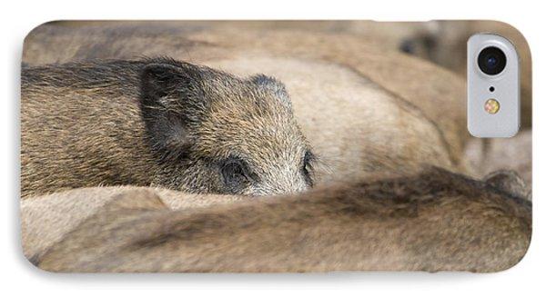 Piglets In Hochwildpark Rhineland Kommern Mechernich Germany Phone Case by Ronald Jansen