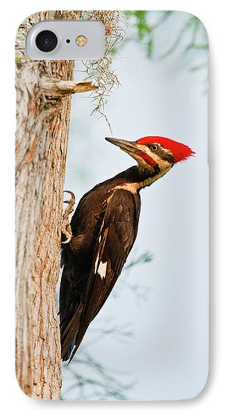 Piliated Woodpecker (dryocopus Pileatus IPhone Case