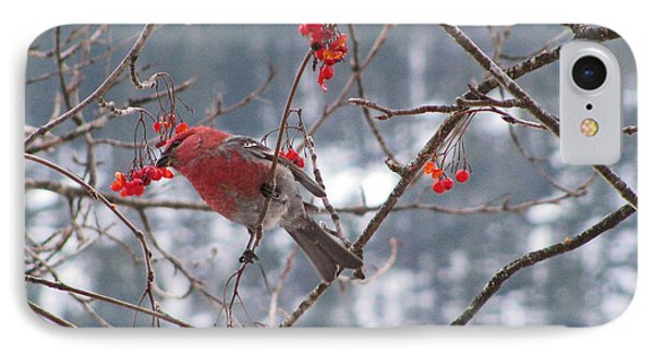 Pine Grosbeak And Mountain Ash IPhone Case by Leone Lund