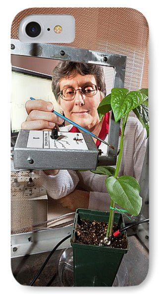Plant Disease Transmission Research IPhone Case by Stephen Ausmus/us Department Of Agriculture