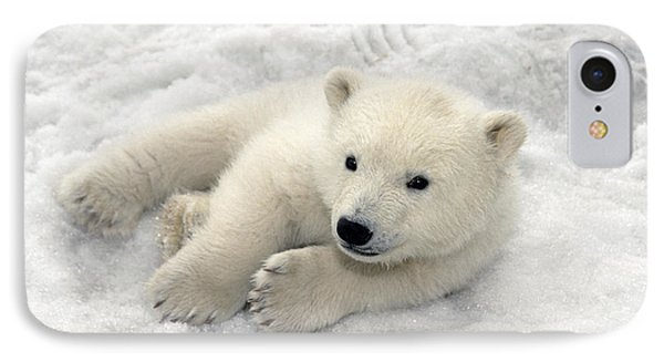 Polar Bear Cub Playing In Snow Alaska IPhone Case by Mark Newman