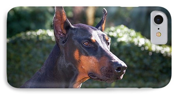 Portrait Of A Doberman Pinscher IPhone Case by Zandria Muench Beraldo