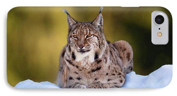 Portrait Of Eurasian Lynx (lynx Lynx IPhone Case by Martin Zwick