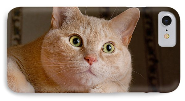 Portrait Orange Tabby Cat Phone Case by Amy Cicconi