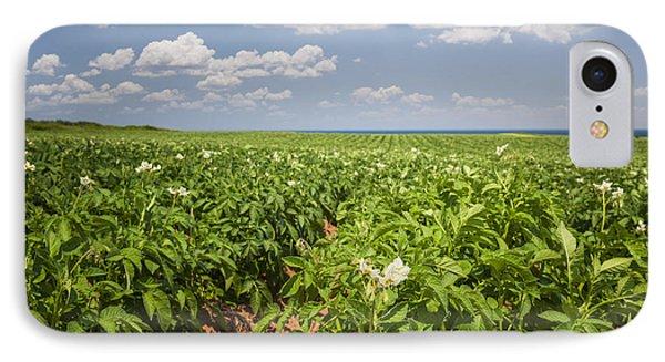 Potato Field In Prince Edward Island IPhone Case by Elena Elisseeva