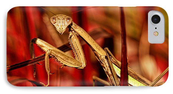 Praying Mantis  IPhone Case by Geraldine Scull