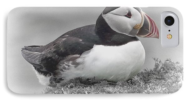 Puffin IPhone Case by Lynn Bolt