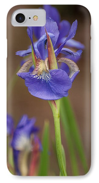 Purple Bearded Iris IPhone Case by Brenda Jacobs