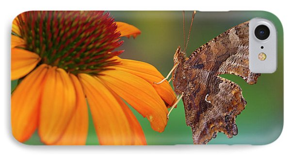 Question Mark Butterfly, Polygonia IPhone Case by Darrell Gulin
