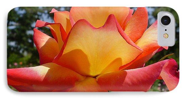 Rainbow Sorbet Rose Close Up IPhone Case