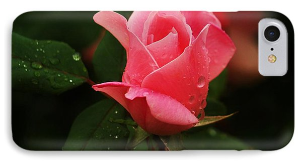 Raindrops On Roses IPhone Case
