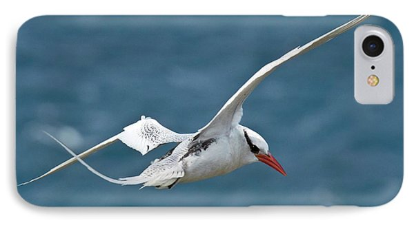 Red-billed Tropicbird In Flight IPhone Case by Bob Gibbons