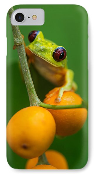 Red-eyed Tree Frog Agalychnis IPhone Case by Panoramic Images