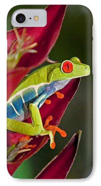 IPhone Case featuring the photograph Red Eyed Tree Frog 2 by Dennis Cox WorldViews