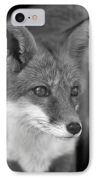 IPhone Case featuring the photograph Red Fox  by Brian Cross