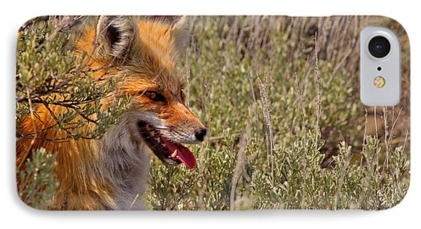 IPhone Case featuring the photograph Red Fox In Sage by Aaron Whittemore
