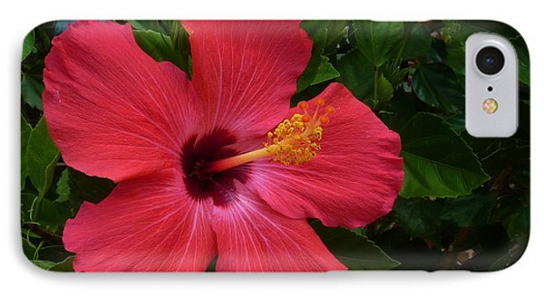 IPhone Case featuring the photograph Red Hibiscus by Jeanette Oberholtzer