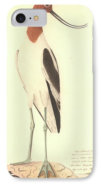 Red-necked Avocet IPhone Case by Natural History Museum, London
