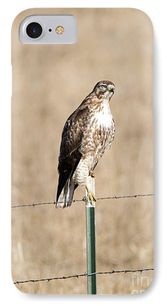 Red Tail Stare IPhone Case by Mike Dawson