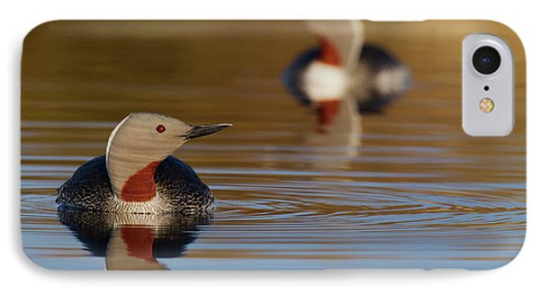 Loon iPhone 7 Case - Red-throated Loon Pair by Ken Archer