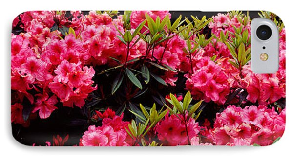 Rhododendrons Plants In A Garden, Shore IPhone Case by Panoramic Images