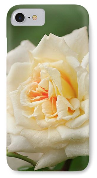 Rosa 'aloha Hawaii' Flower IPhone Case by Maria Mosolova