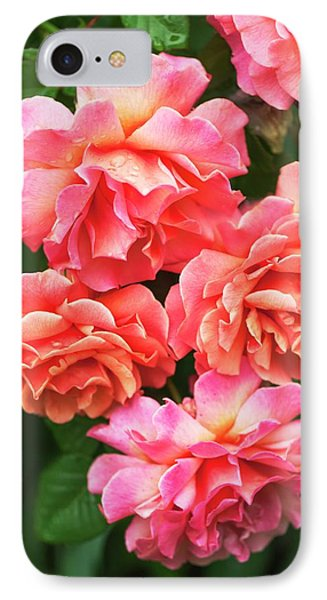 Rosa 'easy Does It' Flowers IPhone Case by Maria Mosolova