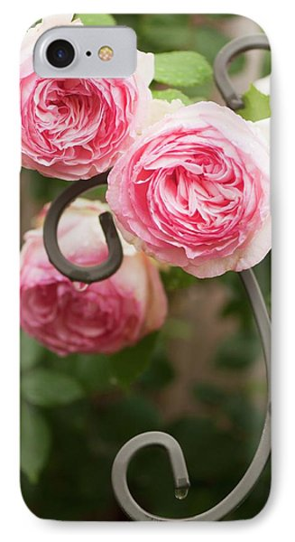 Rosa 'eden' Flowers IPhone Case by Maria Mosolova