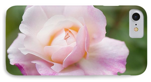 Rosa 'gruss An Aachen' Flower IPhone Case by Maria Mosolova