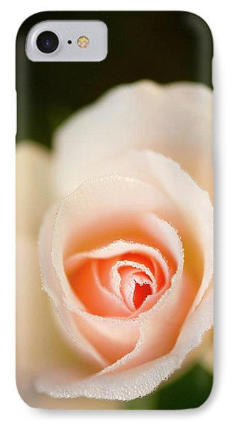 Rosa 'johann Strauss' Flower IPhone Case by Maria Mosolova