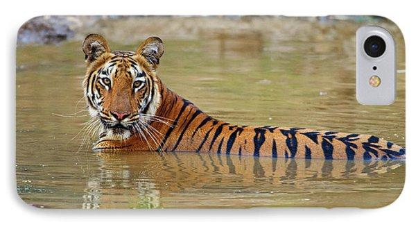 Royal Bengal Tiger At The Waterhole IPhone Case