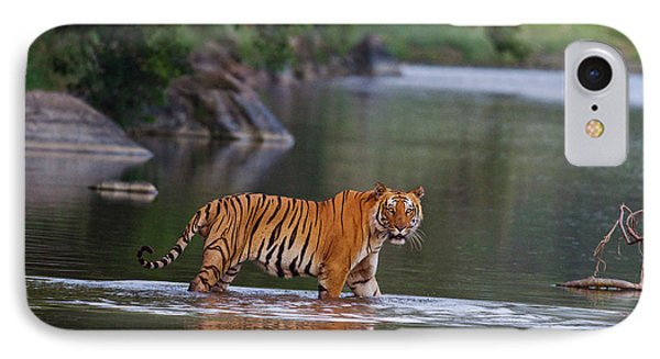 Royal Bengal Tiger, Crossing The River IPhone Case